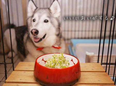 Tetsu_blog938