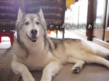 Tetsu_blog958