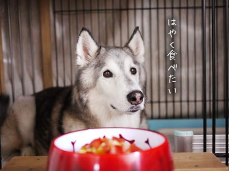 Tetsu_blog965