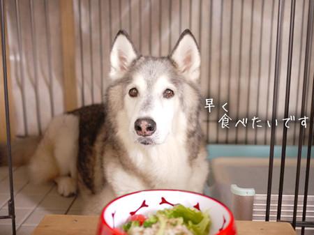 Tetsu_blog1022