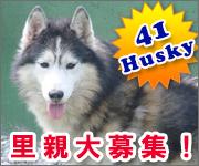 Husky_rescue_1