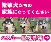 Husky_rescue_2